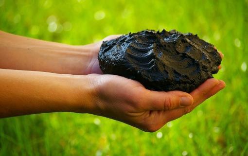 Лечебная грязь и её микроорганизмы