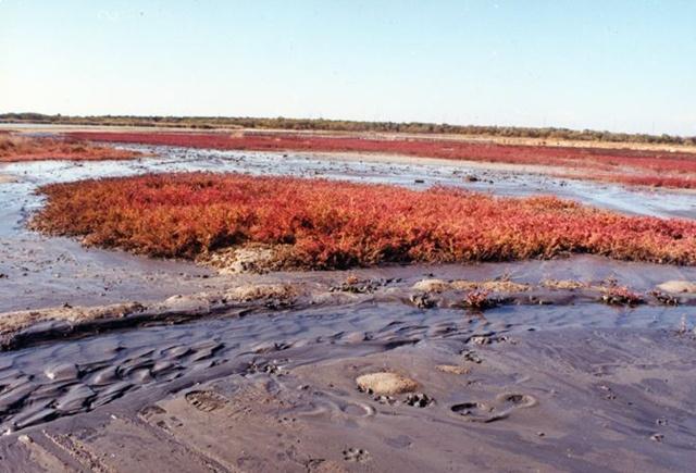 Сакское озеро - источник Сакской лечебной грязи