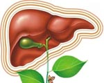 Лечение болезней печени и желчевыводящих путей